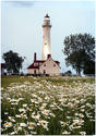 Lighthouse and Daisies by Carol Hansen